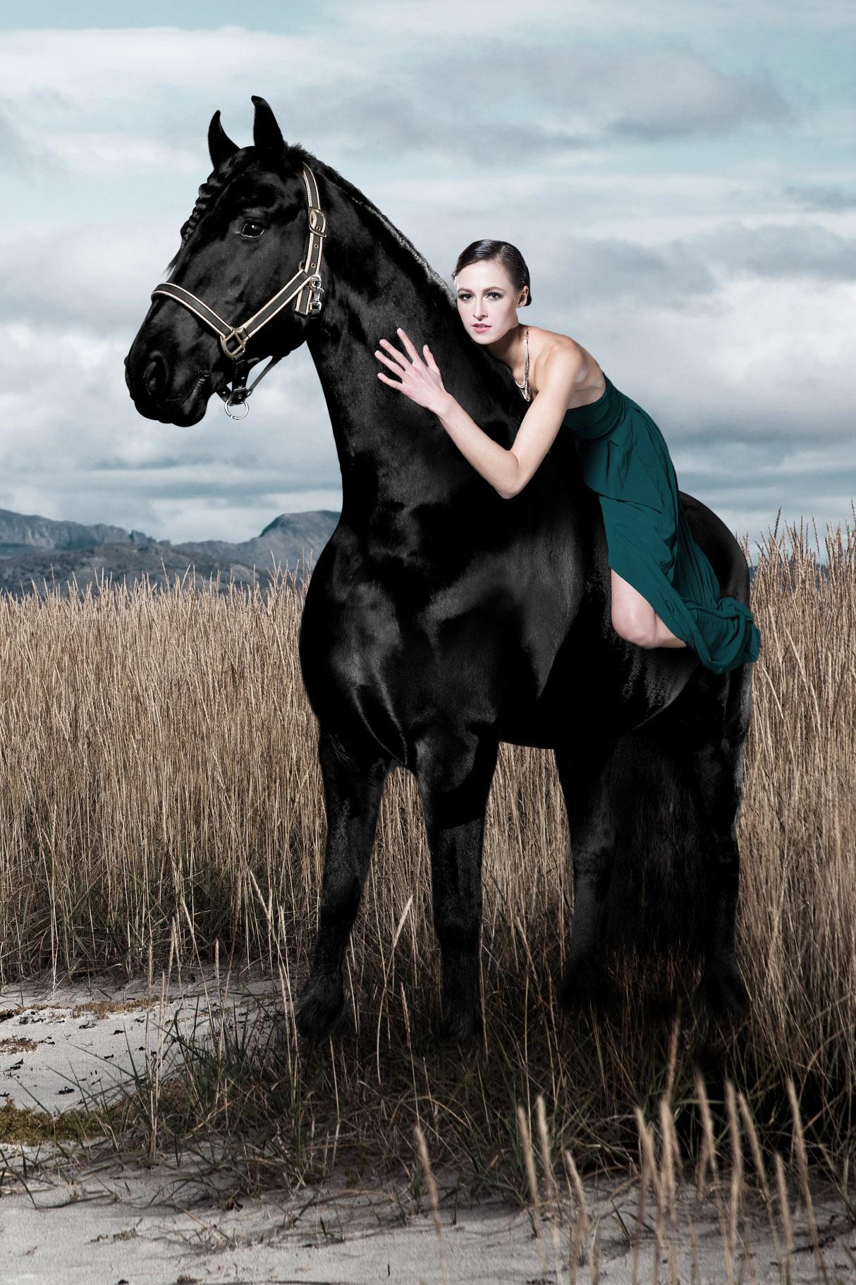 pferd3